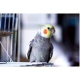 veterinário aves preço Butantã