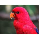 veterinário de pássaros preço Bom Retiro