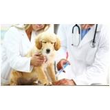médico veterinário