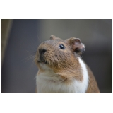 veterinário para hamster preço Jockey Club