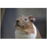 veterinário para hamster preço Alto da Lapa