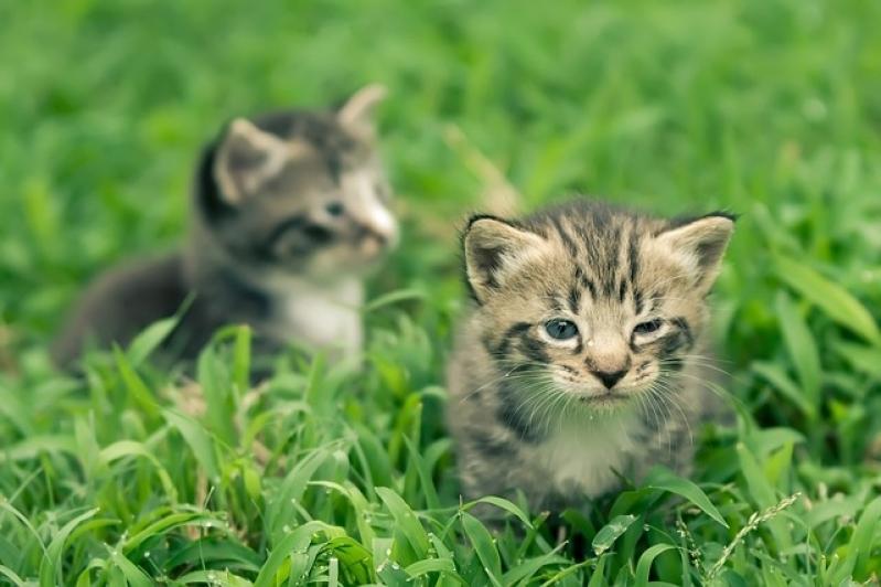 Tratamento de Feridas para Animais a Domicílio