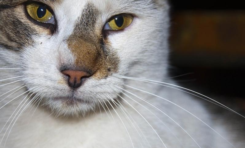 Tratamento de Feridas em Animais Preço Liberdade - Tratamento de Feridas em Cães e Gatos