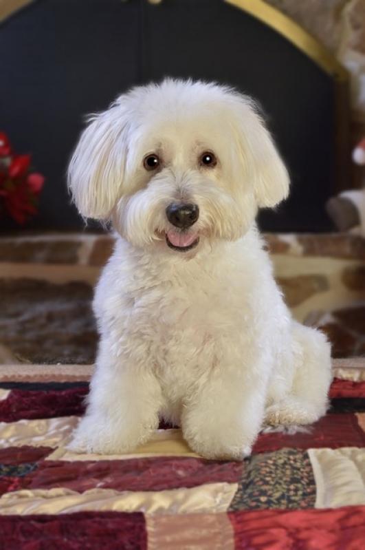 Tratamento de Feridas em Cães e Gatos Jardim Paulista - Tratamento de Feridas em Cães e Gatos