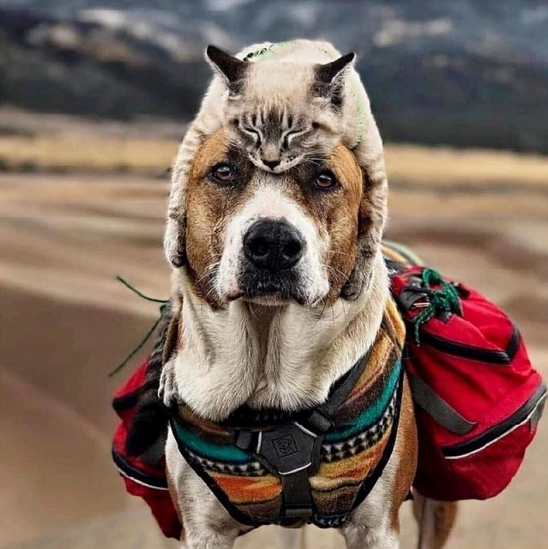 Tratamento de Feridas em Grandes Animais Valor Jardim Paulista - Tratamento de Feridas em Cães e Gatos