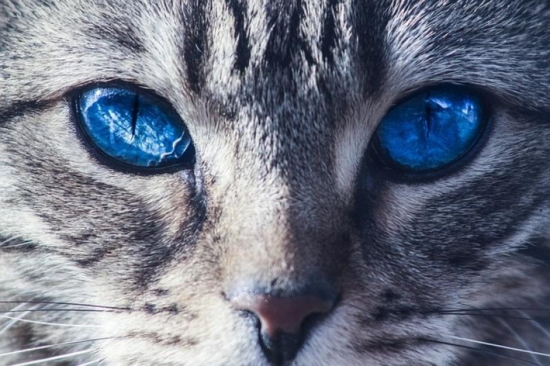 Tratamento para Feridas em Gatos Valor Jardim Iguatemi - Tratamento de Feridas em Cães e Gatos