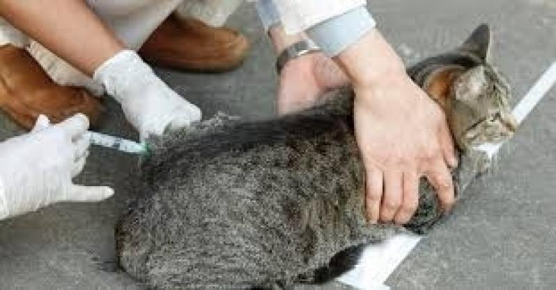Vacina Antirrábica Gatos Preço São Mateus - Vacina Gato Câncer