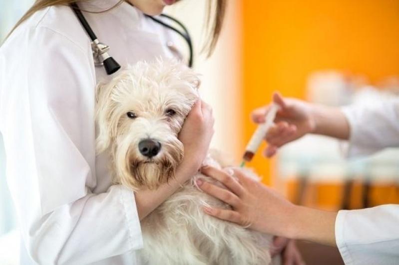 Vacinas Clinica Veterinária Brooklin - Vacina Antirrábica Veterinária