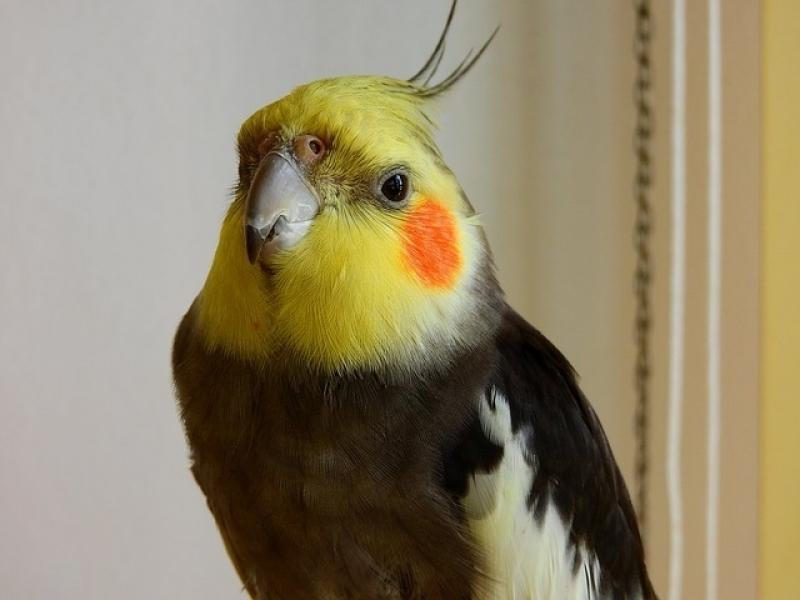 Veterinário para Aves Santa Cecília - Veterinário de Animais Exóticos