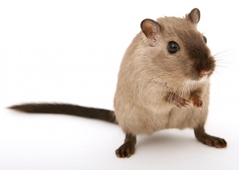 Veterinário para Hamster Valor Itaim Bibi - Veterinário de Animais Exóticos